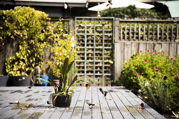 5 ötlet az őszi kerthez