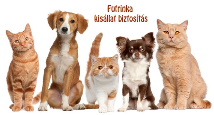 Futrinka kisállat-biztosítás