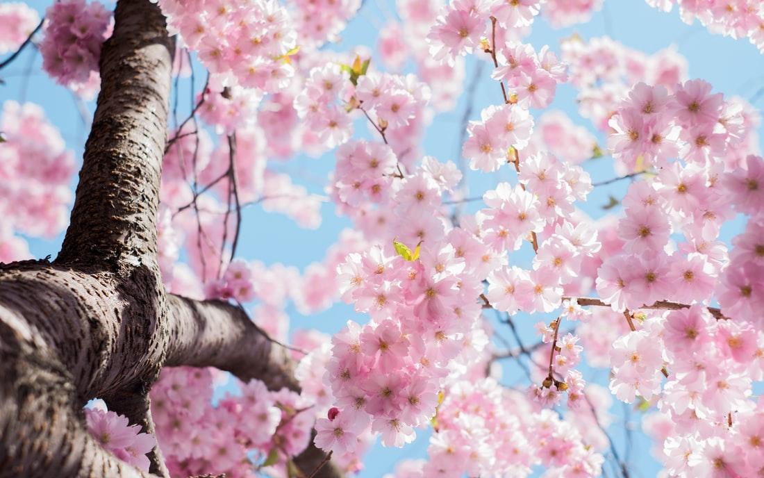 Tavaszi megújulás – Így frissítsd fel otthonodat!